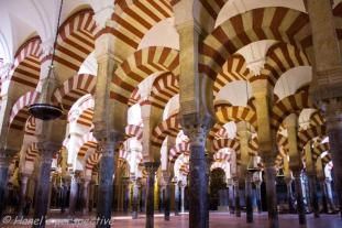 Mezquita of Cordoba: Forst of arches and pillars
