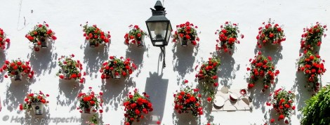 Cordoba: Patio Contests in Spring