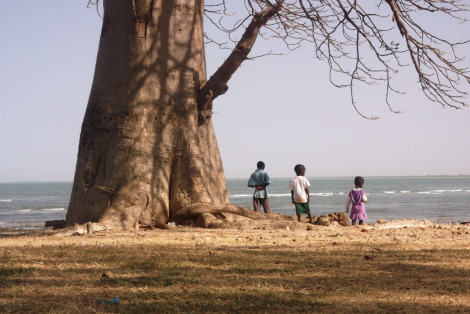 Gambia: Children under a under a Baobab tree